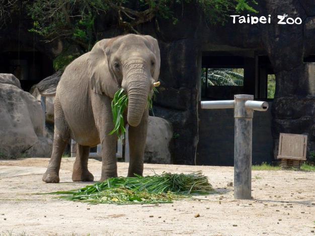 1月份的星期六上午11點,記得來非洲動物園聽保母講古哦!