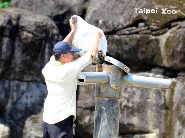 保育員將非洲象喜歡吃的乾糧放在行為豐富化設施(梅花椿)裡
