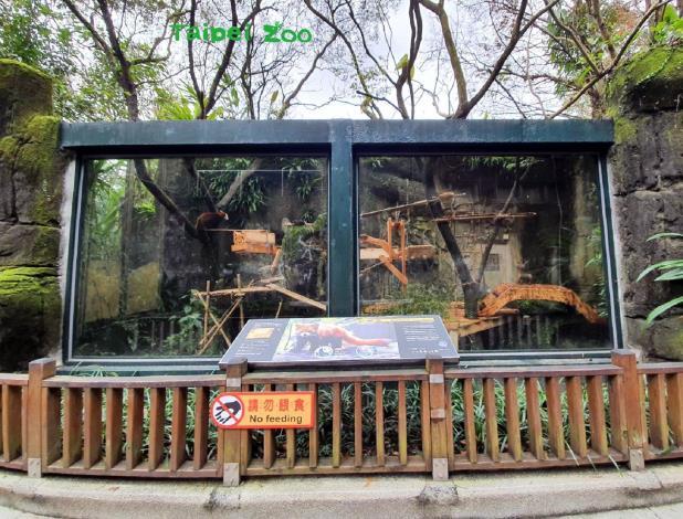 小貓熊戶外活動場,這次最大的改變是將鋼琴絲改成玻璃牆面(詹雅婷攝)