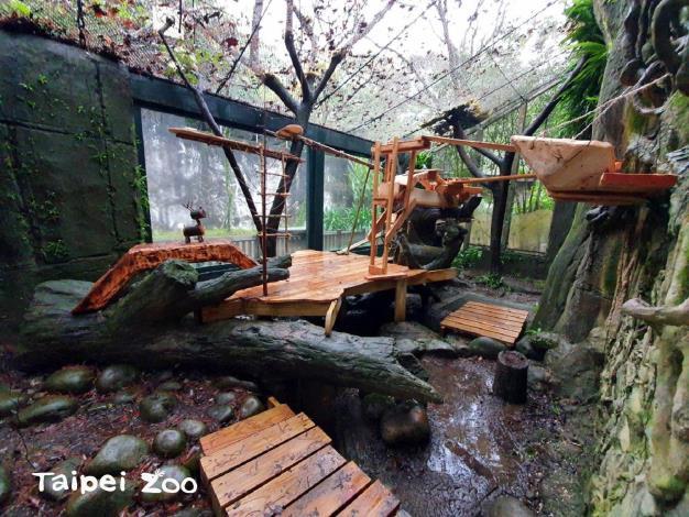 動物園送給小貓熊的新年禮物,是將小貓熊的活動場大改造,來增加他們活動的空間及層次(詹雅婷攝)