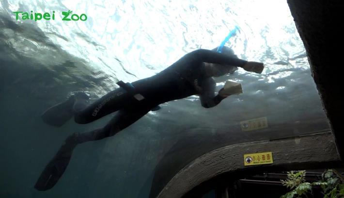 下次拜訪穿山甲館時,如果遇到正在潛水的保育員,記得跟他們揮揮手,為他們加油打氣哦!