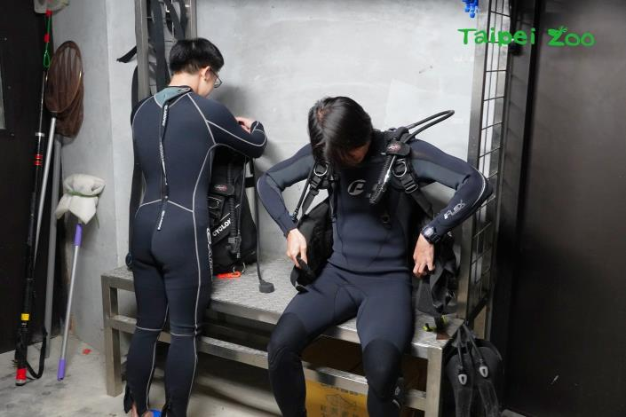 寒冷冬季裡,保育員正在準備變身潛水員,進行象魚池例行性的清潔、魚群照養等工作