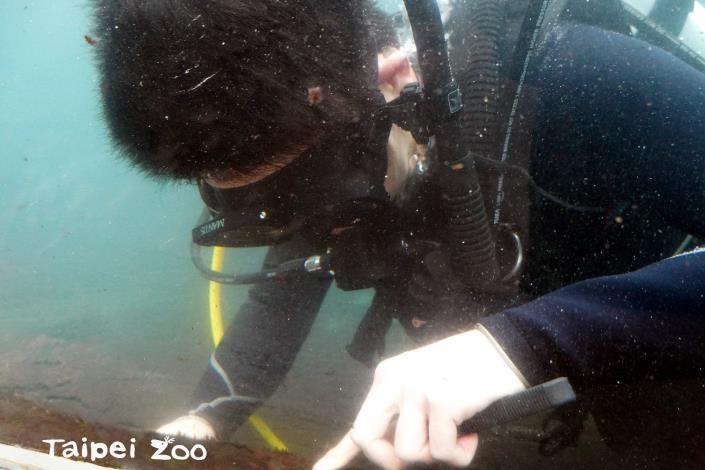 為了讓遊客能夠清楚觀察到水下的世界,保育員就要定期清理這些藻類