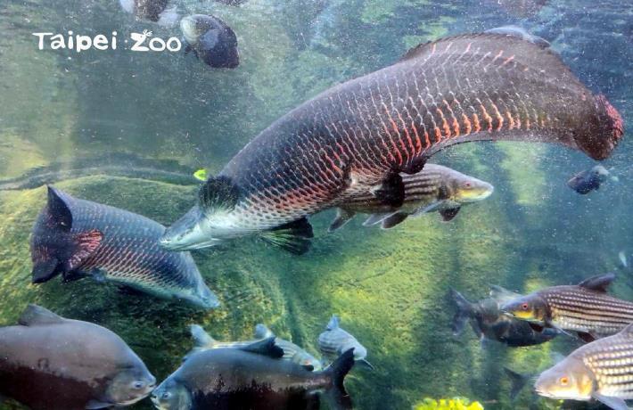 象魚:有來動物園,記得一定要來看我們哦!