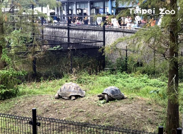 位在兩棲爬蟲館出口處的新活動場,有一處寬廣的小丘陵、一座讓象龜喝水沖涼的水池,以及讓象龜取暖蔽蔭的室內活動場