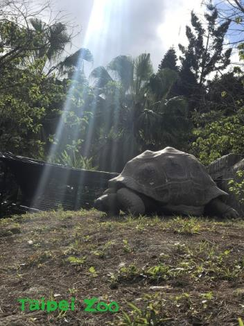 鼓勵大家學學亞達伯拉象龜,沒事多運動,長命百歲哦!