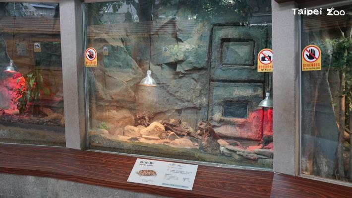 歡迎大家到兩棲爬蟲動物館拜訪餅乾龜