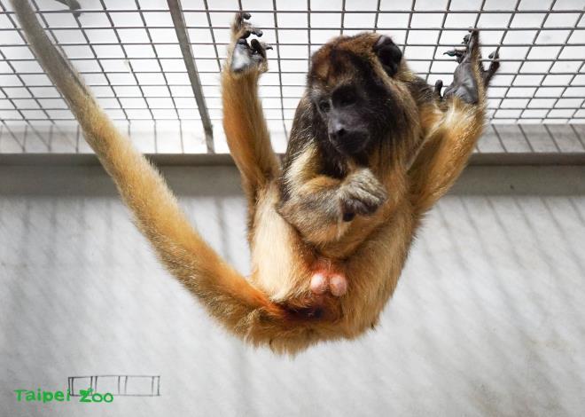 「黑吼猴」:我們都是男生哦!小編:嗯!我知道,很明顯!(好害羞)