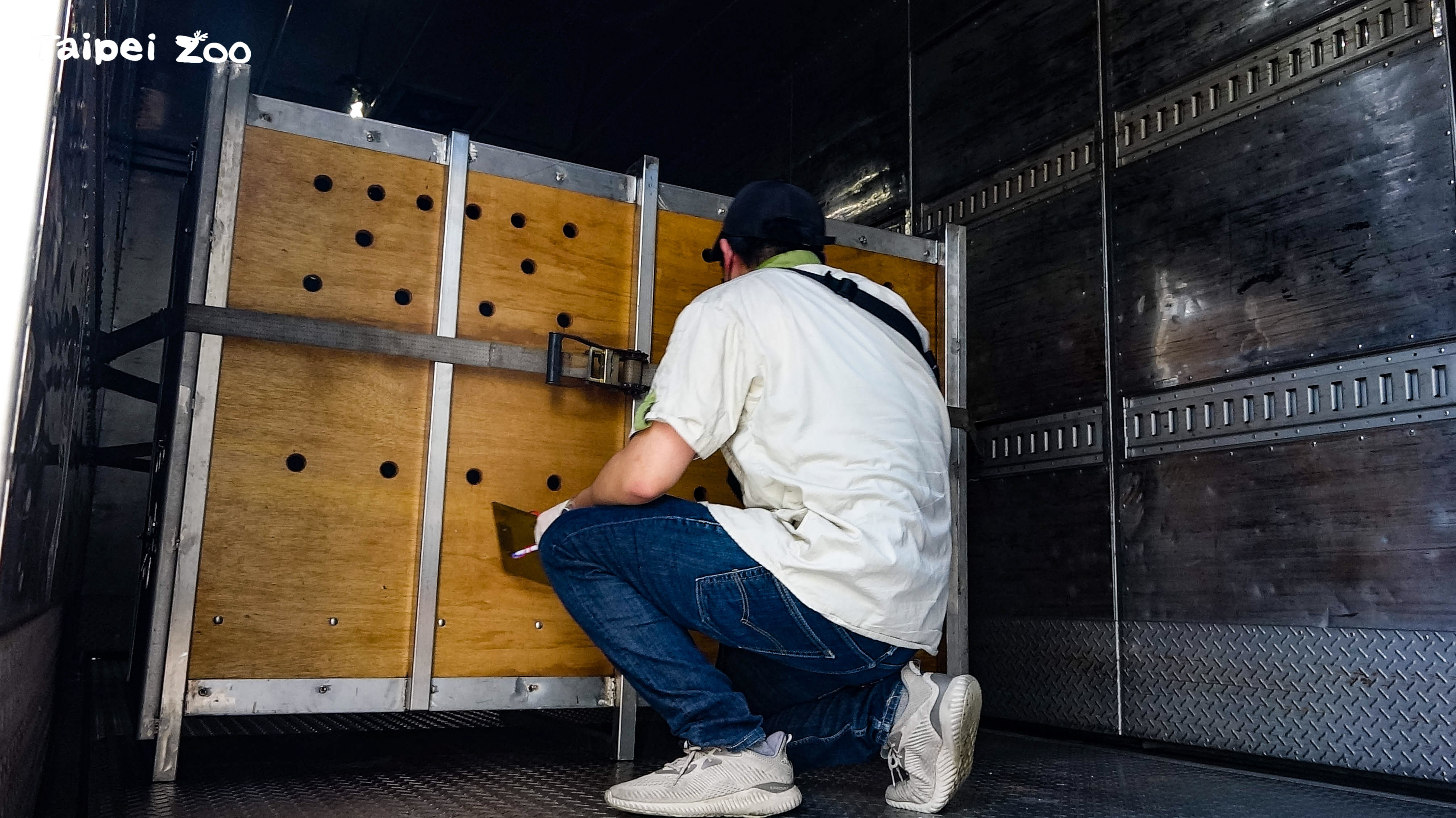 動物進入運輸箱籠後,獸醫師透過孔隙觀察牠們的狀況
