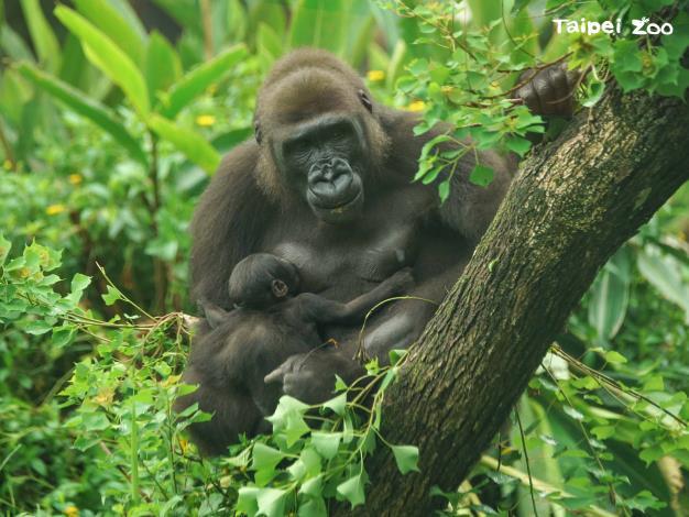 溫柔的媽媽「Iriki」每天都把寶寶穩穩地抱在懷裡,將寶寶照顧得妥妥當當