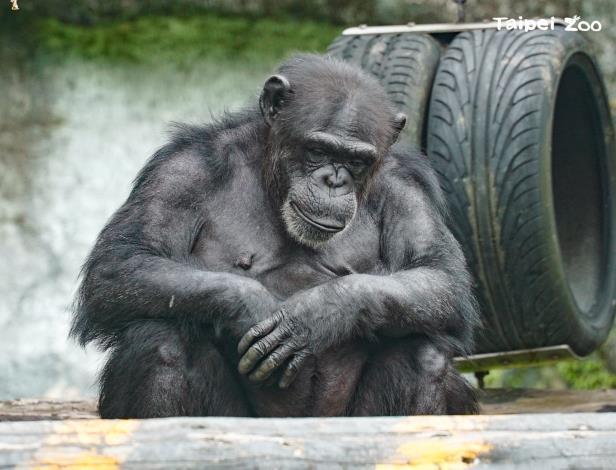 經過動物活動場時,請務必輕聲細語,才不會驚擾了動物們的日常作息呦!