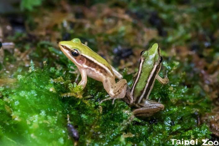 蛙蛙的一小步 保育的一大步