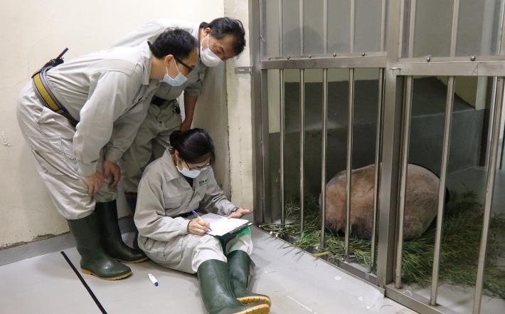 zoo keeper keep an eye on their interaction.JPG
