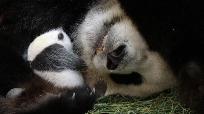 Snuggling to sleep
