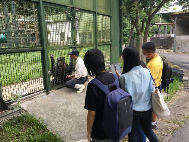 臺北市立動物園示範為黑猩猩量體溫、口腔檢查及外傷敷藥等過程