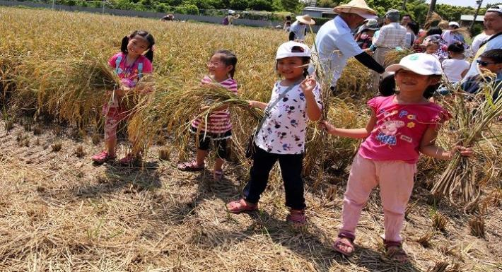 北投水稻季