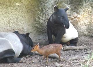 Taipei Zoo Event to Raise Awareness on Tapir & Biodiversity
