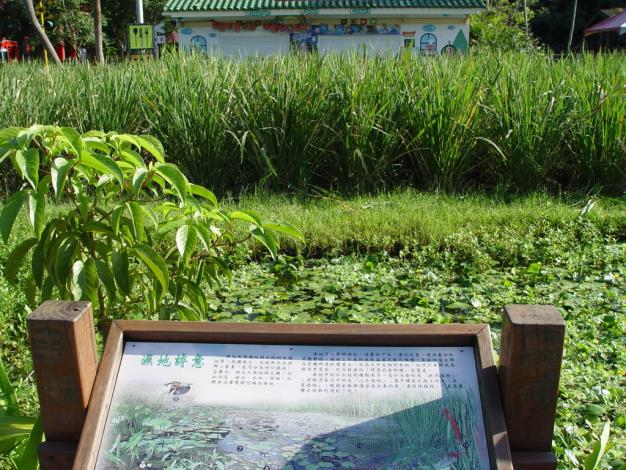 Water bamboos ready to be harvested