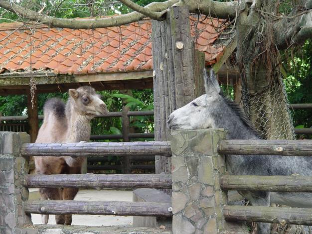 Yan-yu and the donkey are neighbors.