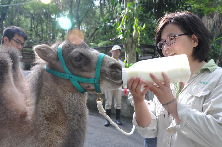 Yan-yu stooped to drink milk.[Open in new window]