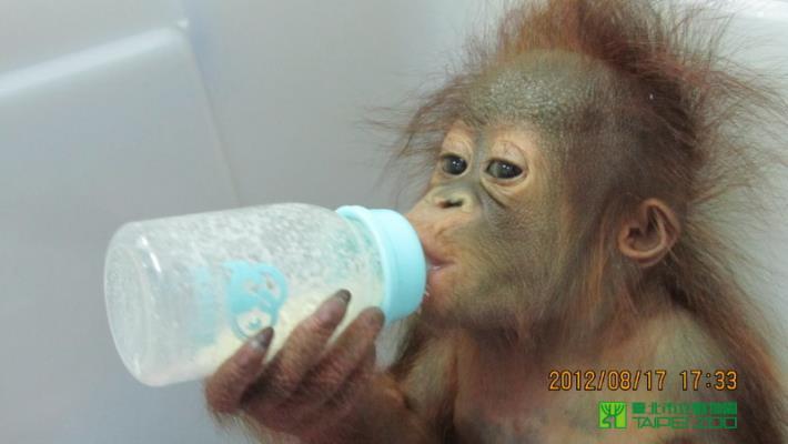 Nui-li drinking milk