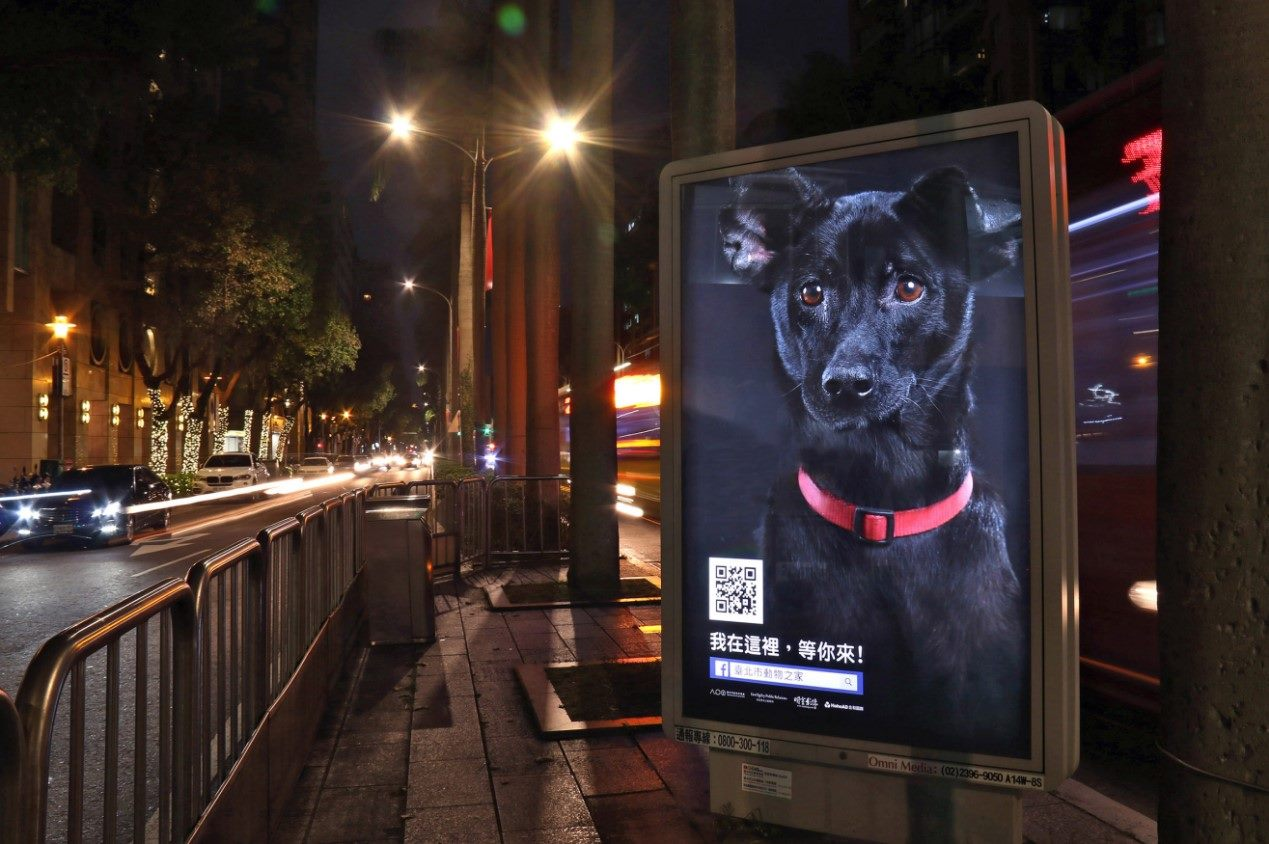 Year of the Dog: APO Holds Campaign to Boost Black Dog Adoption