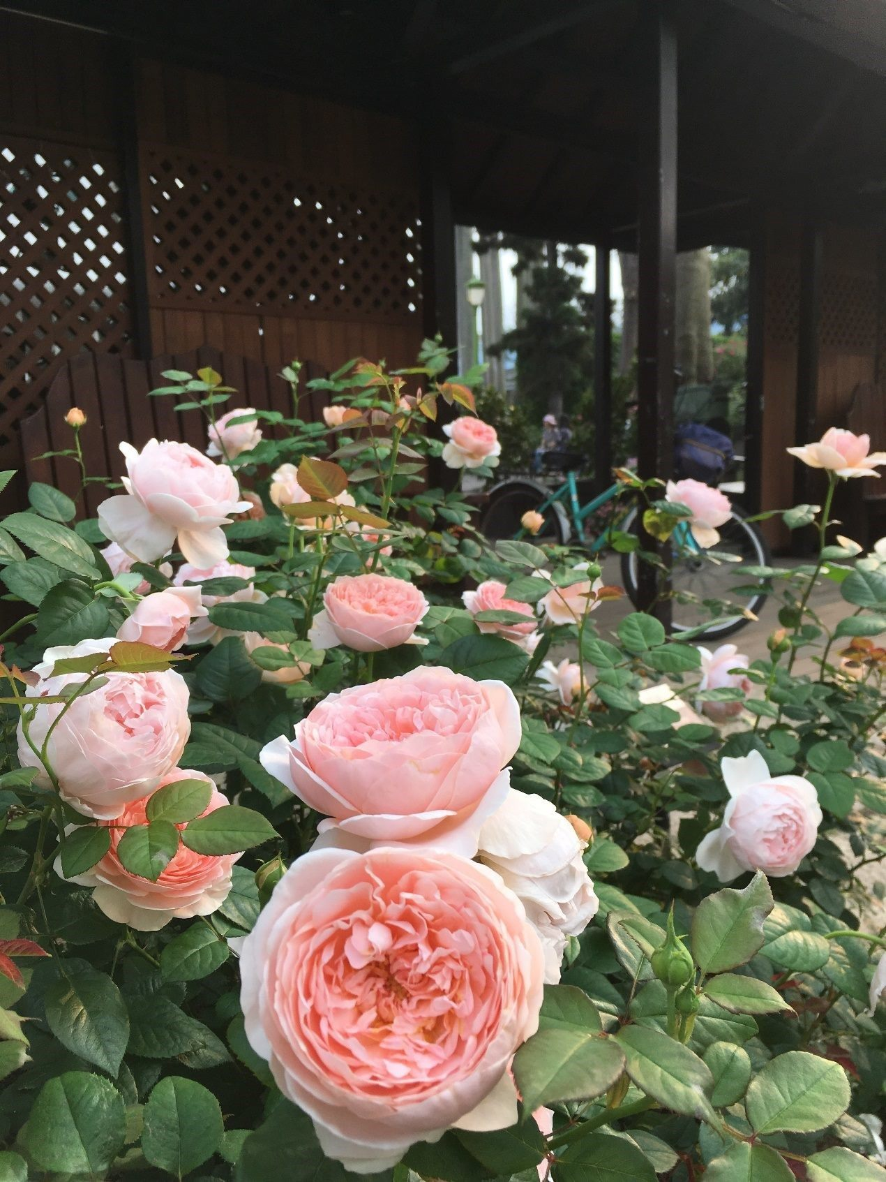 Take Time to Smell the Roses at Taipei Rose Garden