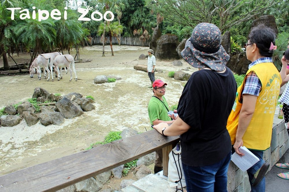 Taipei Zoo to Implement Extended Hours during Summer Weekends