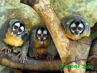 Revisiting Nocturnal Animals at Taipei Zoo's Tropical Zone House