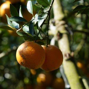 The Beitou Tankan Orange Festival Mountain Hike: Now Open for Registration!