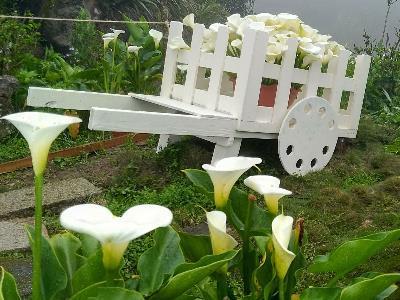 Calla Lily Festival Features Floral Design Selfie Hot Spots