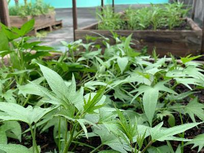 Free Soil Conditioner Available for Citizens through Registration
