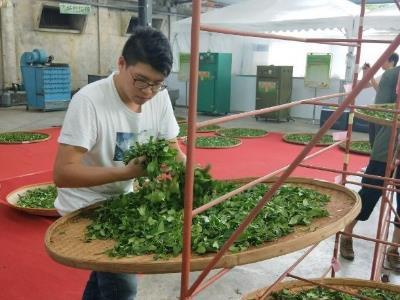 Muzha Outstanding Youth Tea Farmer Represents Taipei in National Tea Competition