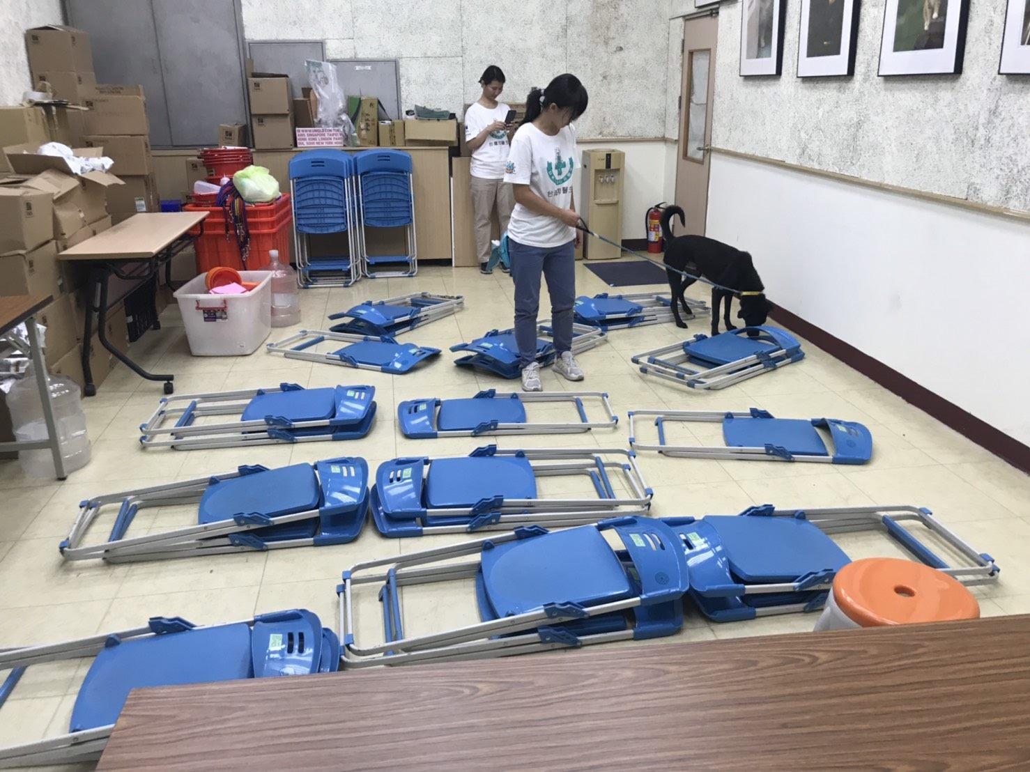 Dogs undergoing training for the Home Dog Program