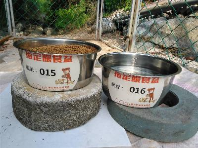 The numbered feeding bowls used by volunteers to feed street dogs