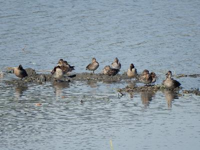 Water fowls at the conservation area