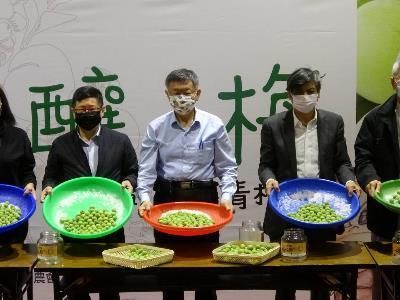 Mayor Ko promotes the plums of Nantou County