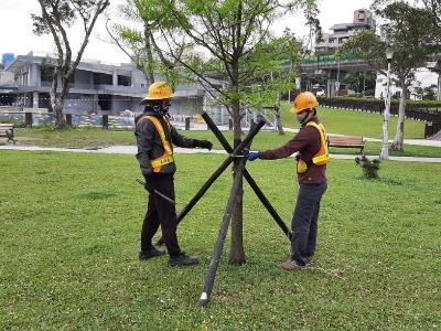 PSLO workers check support stakes for a park tree.