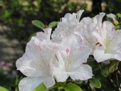 2016 Yangmingshan Flower Season