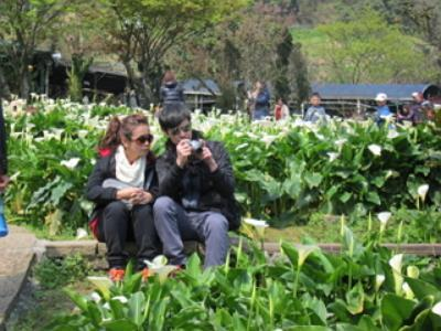 The 2016 Calla Lily Festival: Aesop's Fables Part 2
