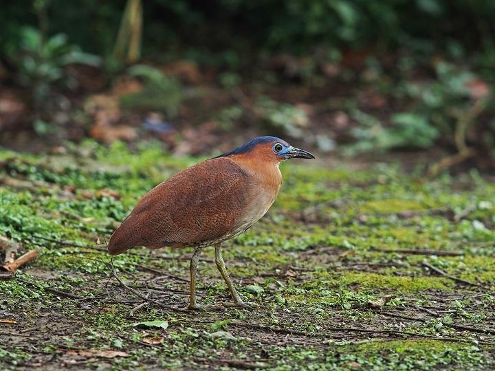 Taipei Avian Touring On City Corners - The Beauty of Birdsong