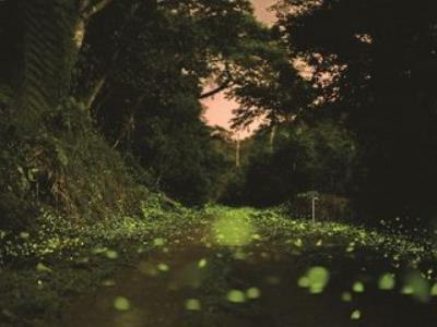 Firefly Season in Taipei