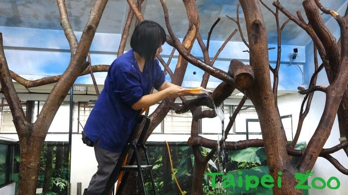 Zoo staff are cleaning
