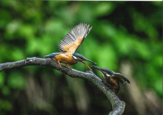 Bird's photo