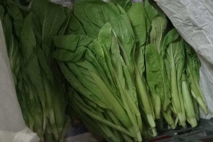 1-小芥菜