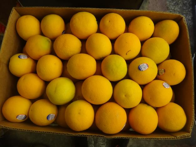 2-柳橙.JPG