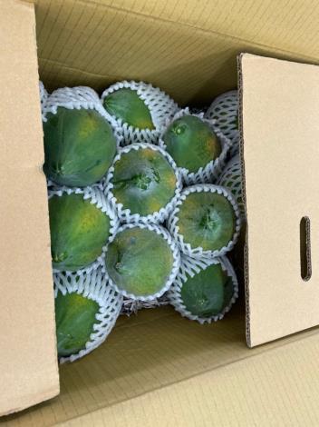 10-木瓜.JPG