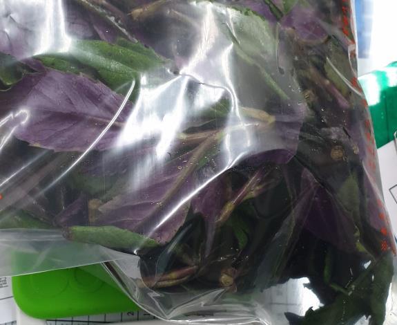 8-紅鳳菜