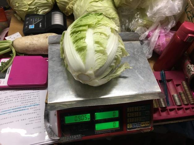 7-包心白菜