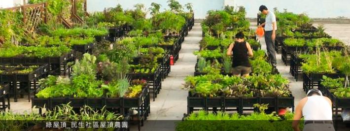 綠屋頂_民生社區屋頂農園